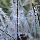 Frosted Grass by vigor
