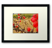 spike with red berries Framed Print