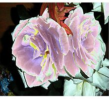 Velveted Roses Photographic Print