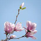 Aspiring Magnolias by Gerda Grice