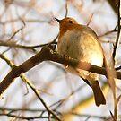 Under the Robin by qshaq