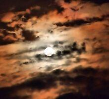 Moonlit Night by Stephanie Harwell