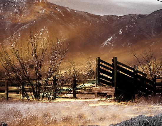 Cattle Pen Sepia by Winona Sharp