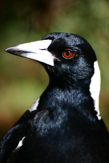 Murderous Magpie by Erland Howden