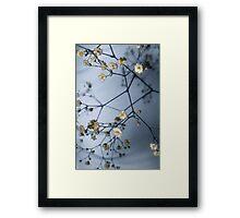 Gypsophila and Shadows Framed Print