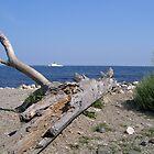 Coastal NH 2 by Christine Frydenborg Dargon