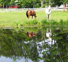 Horses in Berkshires 4 by Christine Frydenborg Dargon