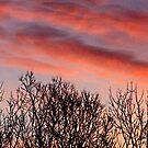 winter sunset by donald beynon