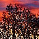 winter sunset 2 by donald beynon