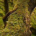 """""""CLAW""""  Branch and tree. by Billlee"""
