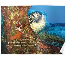 Sleepy Turtle Poster