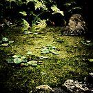 Koi Pond by HouseofSixCats