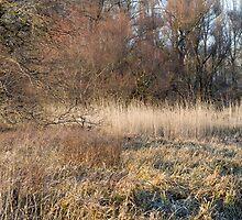 Winter Floodplain Forest by Inimma