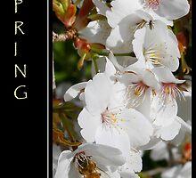 Spring by Kim Roper