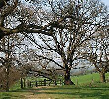 Trees in farndale   by dougie1