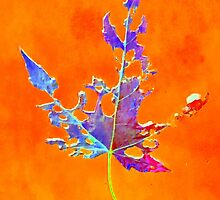 Somebody had Leaf for Lunch – Orange by Mike Solomonson