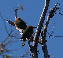 Two Bee Eaters by Karli Martin