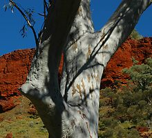 Snappy Gum, Dales Gorge, Karijini by Richard  Stanley