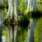 Cypress Swamp Reflections by Mary Campbell