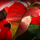 Poinsettia Leaves by Linda  Makiej