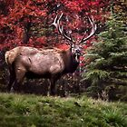 Elk Autumn by Kathy Weaver