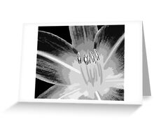 TIGER LILY ~ MONOCHROME ~ WIDE BRUSH OIL ON CANVAS Greeting Card