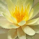 WATERLILY ~ WATERCOLOUR ON CANVAS by LacewingDesign