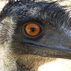 emu eye by shallay