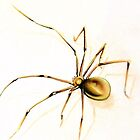 Brown Spider by JoanOfArt