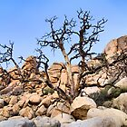 "Joshua Tree National Park Series - ""A Hard Life""  by Philip James Filia"