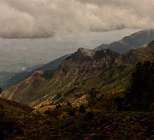 Horton Plains by Kylie Reid