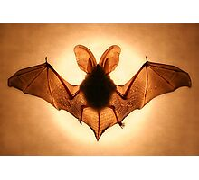 Bat Photographic Print