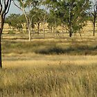 The real Australian bush. Collinsville. by Sue  Fellows