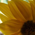 Yellow Daisy by MissA