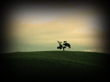 Little Tree by bchrisdesigns