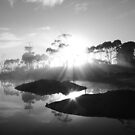 black and white sunrise at Forest  in far nor west Tasmania , Australia by phillip wise
