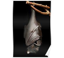 Bat on Black Poster