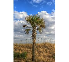 Lone Palmetto Photographic Print