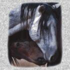Loving Wild Mustangs by Judson Joyce