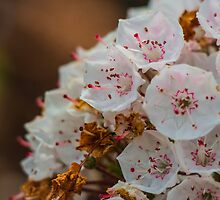 Soft Pink and White Flowers by Nicole Petegorsky