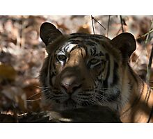 Dappled Tiger  Photographic Print
