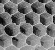 Honeycomb Detail #2 by Nicole Petegorsky