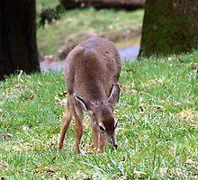 Deer Eyes by Kat Miller