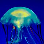 Jelly by Bob Wall