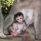 Newborn Monkey by omghai