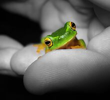 Baby Frog Colour Pop! by Cameron Galipo