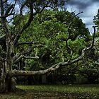 Hanging Tree by Luke Haggis