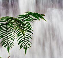 Tree Fern by Chaminda Subasinghe