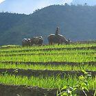 Sapa Vietnam by Arno Mulderij