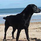 Labrador by the sea by unique